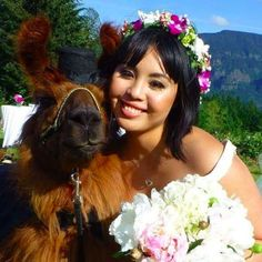LOOK The Worlds Cutest Therapy Llama And Therapy Alpaca Alpacas - If you hate humans you can now invite llamas to your wedding instead
