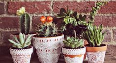 Lace Flowers Pots by A Beautiful Mess Suculentas Interior, Suculentas Diy, Cactus E Suculentas, Easy Craft Projects, Easy Crafts, Project Ideas, Craft Ideas, Diy Ideas, Upcycling Projects