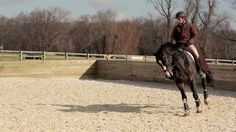 Engaging the Hind End ...these are great exercises that I'll be using next time I ride!