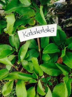 Katakataka