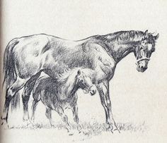 Exterminator & Peanut from Old Bones, the Wonder Horse, illustration by Wesley Dennis. Still have the Scholastic paperback I treasured in grade school. I hoped I would meet them in Heaven. Amazing Drawings, Art Drawings, Horse Story, Horse Posters, Horse Books, Horse Silhouette, Vintage Horse, Equine Art, Horse Art