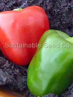 California Wonder - Heirloom, Untreated, Open Pollinated, Vegetable Seeds - Sustainable Seed Company