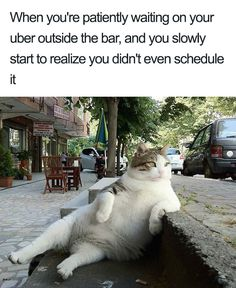 SkunkWire brings you cute and funny animal pictures every day. We got funny cats and cute dogs, plus lots of other funny animal pictures Animals And Pets, Funny Animals, Cute Animals, Animal Memes, Funniest Animals, Awkward Animals, Baby Animals, Fat Cats, Cats And Kittens