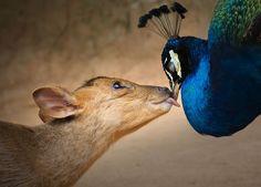 Sony World Photography Awards, 15 foto straordinarie scelte da HuffPost. I mille volti della vita sul pianeta Terra