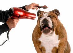 ¿Es bueno secar a mi perro con secadora?