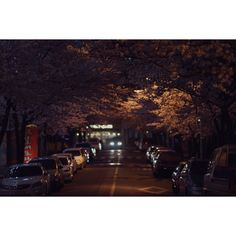 시간은 흘러 밤이 되었다...   3월의 마지막 밤...   벚꽃은 ing...    #sony #a7 #SonyA7 #digitalcamera #lens #nikon #105mm #snap #photo #night #night_photo #daily #일상 #korea #ig_korea #대구 #벚꽃 #꽃스타그램 #찍스타그램 #20150331 #사진추억과기억을공유하다 #photoholic #김군_Photography