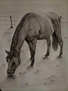 Zeichnung eines Pferdes. Bleistiftzeichnung