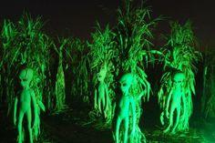 Explore the Haunted Trail at Cox Farms: Aliens in the Cox Farms Fields of Fear Cornfield