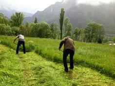 Demostració de dalla - 2a Fira de Productes del Parc Natural de l'Alt Pirineu i de la Ovella Aranesa d'Arrós de Cardós