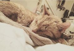 Pünktchen Cat | Pawshake