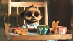 compare the meerkat wallpaper - Google Search
