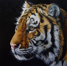 Tiger - wildlife oil painting commission, painting by artist Anne Zoutsos
