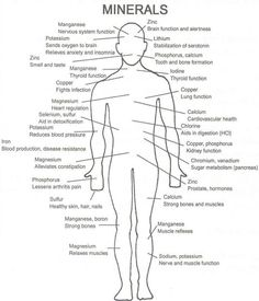 ROLE OF MINERALS IN OUR BODY_clip_image002.jpg (623×727)