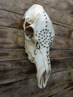 Rústic Decor, Real Cow (Elk) Skull Decorated, Southwestern Decor ...