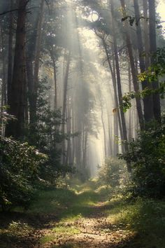 nature , foggy , forest , photography - My list of the most beautiful artworks Foto Nature, All Nature, Magical Forest, Tree Forest, Foggy Forest, Forest Path, Forest Light, Forest Road, Conifer Forest