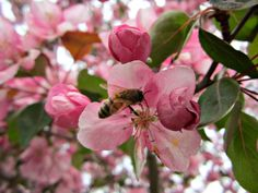 Cbus52: Columbus in a Year: Bees + Blossoms
