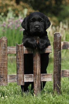tooooo adorable