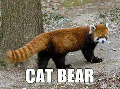 CAT BEAR