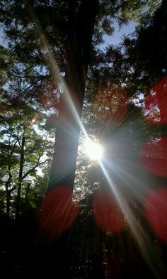 Great Pictures, Cool Photos, Nature Is Speaking, Youre Everything To Me, Orb Light, Fukuoka Japan, Natural Energy, Human Condition, Lens Flare