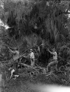 Florida Memory - Hunting scene with Texas Jim Mitchell's party in the Everglades.