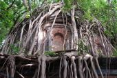 Banyan Tree, i want a tree house