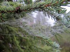 closeup of a spider web on a tree