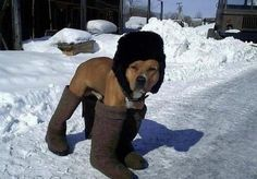 boot dog..... This will be Charley once it finally decides to snow!
