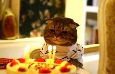 42 Best Funny Birthday Pictures & Images - My Happy Birthday Wishes Funny Cats, Funny Animals, Cute Animals, Jungle Animals, Crazy Cat Lady, Crazy Cats, Hate Cats, Animal Pictures, Funny Pictures