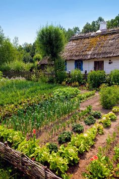 Growing an organic garden has benefits for your health and the planet. Learn everything you need to know to plan, grow, and care for your own organic garden. Garden Cottage, Farm Gardens, Rustic Gardens, Dream Garden, Garden Planning, Farm Life, Garden Projects, Garden Inspiration, Beautiful Gardens