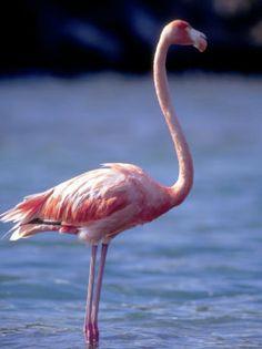 Art.com:view:flamingo