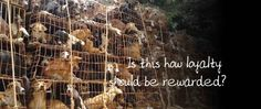 Each year in Asia, millions of dogs are brutally tortured and slaughtered for their meat. Please help Soi Dog Foundation end this by donating now.