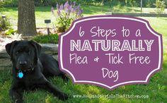 ♥6 Steps to a Naturally Flea & Tick Free Dog♥ 1) Diatomaceous Earth (DE); 2) Homemade Flea & Tick Repellant Collars; 3) Bathing; 4) Flea traps; 5) Home-made natural flea & Tick Repellant Spray ; 6) flea combs. http://www.healthstartsinthekitchen.com/2013/05/30/6-steps-to-naturally-flea-tick-free-dog/