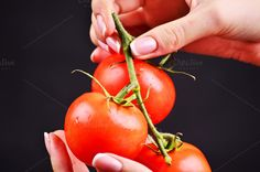 Tomato in hands by Victoria Rusyn Shop on Creative Market