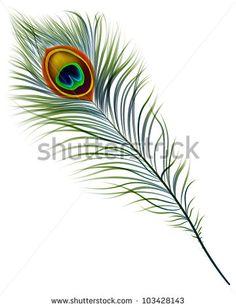 stock-vector-vector-isolated-peacock-feather-eps-103428143.jpg (360×470)
