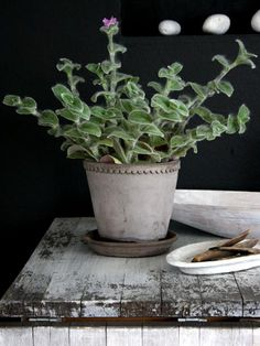 houseplant plant potted shabby decor