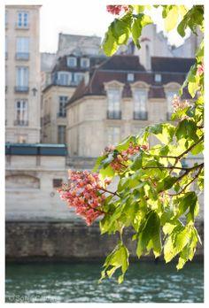 Paris springtime on the River Seine, chestnut blossoms, romance, April in Paris, wall decor 8x12 Original Fine Art Photography