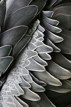 Grey Platte