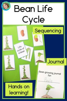 Growing and observing beans and other vegetables in your own small garden has many benefits for you and your children.  Why not add observing and documenting the growth of your plants?  This simple journal has students observe, measure, draw and write about plant growth, and includes sequencing cards and cut and paste worksheets to follow up.  Perfect for home or school, you can grow your beans in small pots, raised beds, inside, or in the back yard.  Just add soil and seeds! TpT$