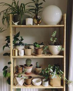 De simples étagères en bois recouvertes de plantes d'intérieur
