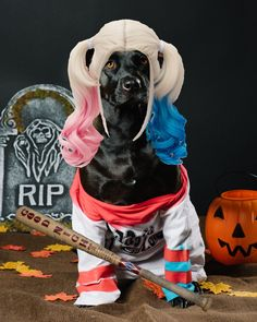 harley quinn in a dog costume