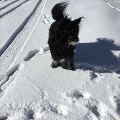 Snow, Dogs, Outdoor, Doggies, Outdoors, Outdoor Life, Garden, Pet Dogs, Human Eye
