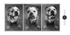 Miss Bella - #petphotography