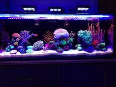 Egginis Nuvo 24 - Members Aquariums - Nano-Reef.com Forums