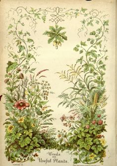 heaveninawildflower:  Frontispiece of 'Weeds and Useful Plants' by William Darlington (1859). Published by A.O. Moore and Co.  Missouri Bota...