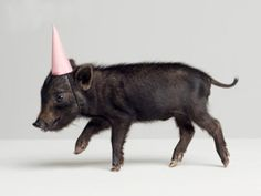 a pet pig would be cool, especially if he wore a party hat.