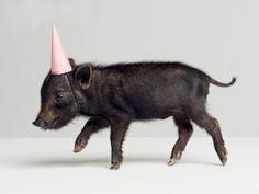 Party Piggy