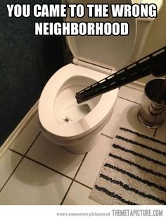 the itsy bitsy spider came up the water spout,out came the gun and wiped the fucker out, meme Itsy Bitsy Spider, Water Spout, Lol, Just For Laughs, Funny Photos, Funny Images, Laugh Out Loud, The Funny, Funny Farm
