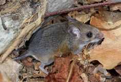 O mouse! by cotinis, via Flickr