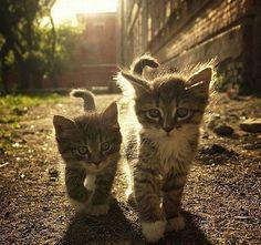 Výsledek obrázku pro fun cats