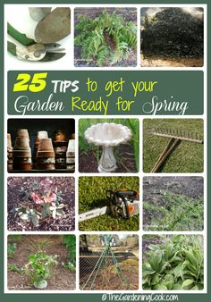 Is your garden ready for spring?  See my 25 tips to make sure that you get your garden off to a great start.  http://thegardeningcook.com/25-tips-to-get-your-garden-ready-for-spring/